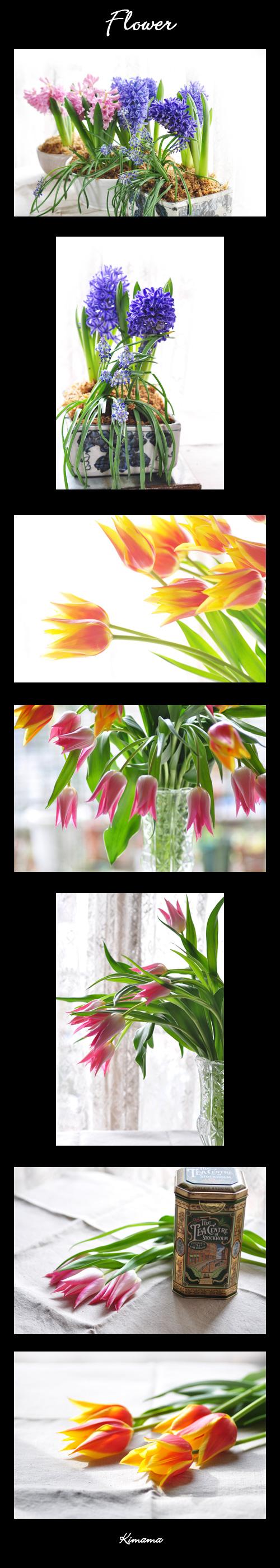 2月27日flower