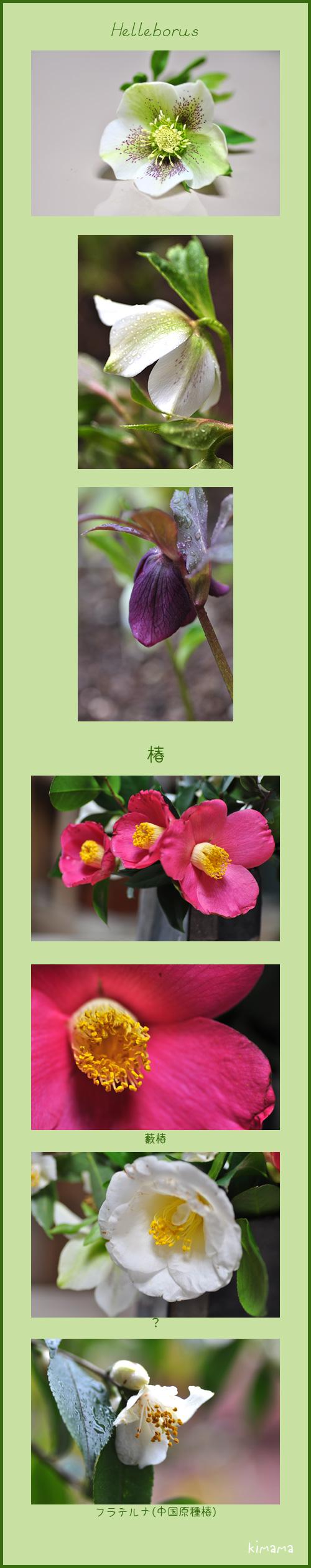 3月2日庭の花