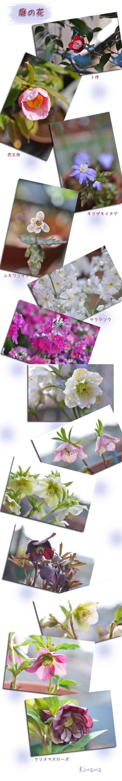 3月16日庭の花