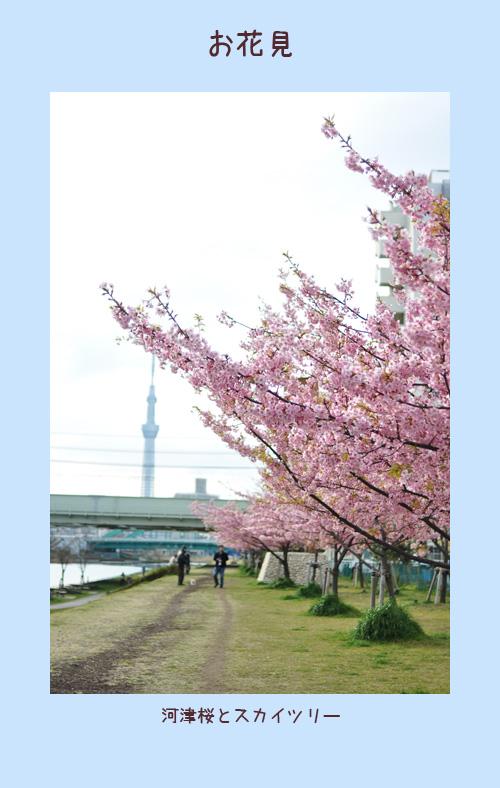 3月26日お花見1