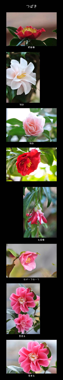 3月31日庭の花2