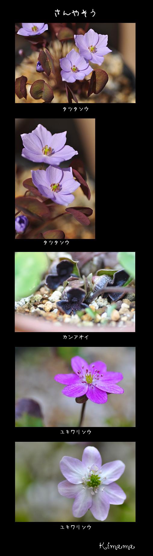3月31日庭の花3