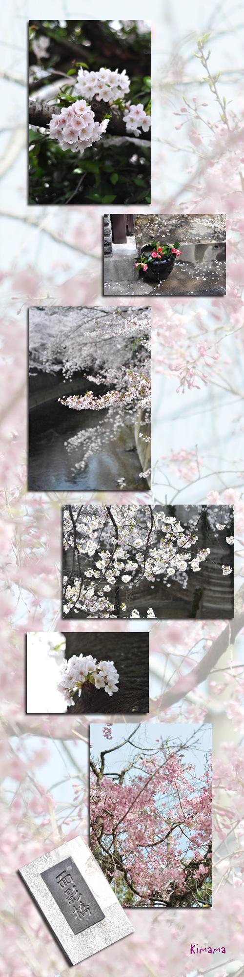 4月11日神田川3
