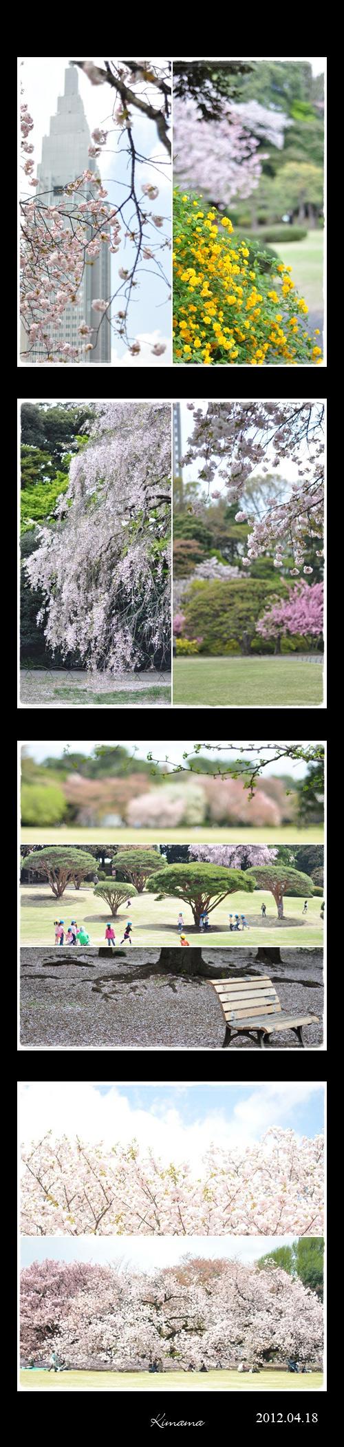4月19日新宿御苑3