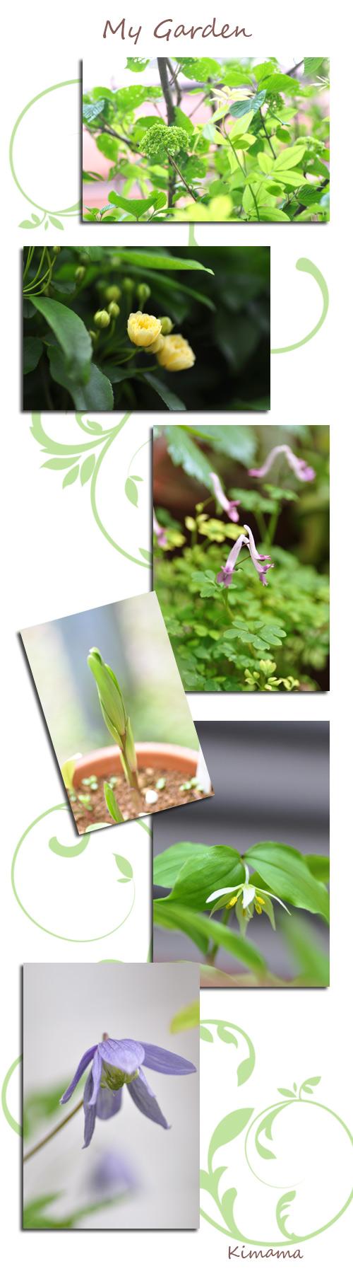 4月21日庭の花