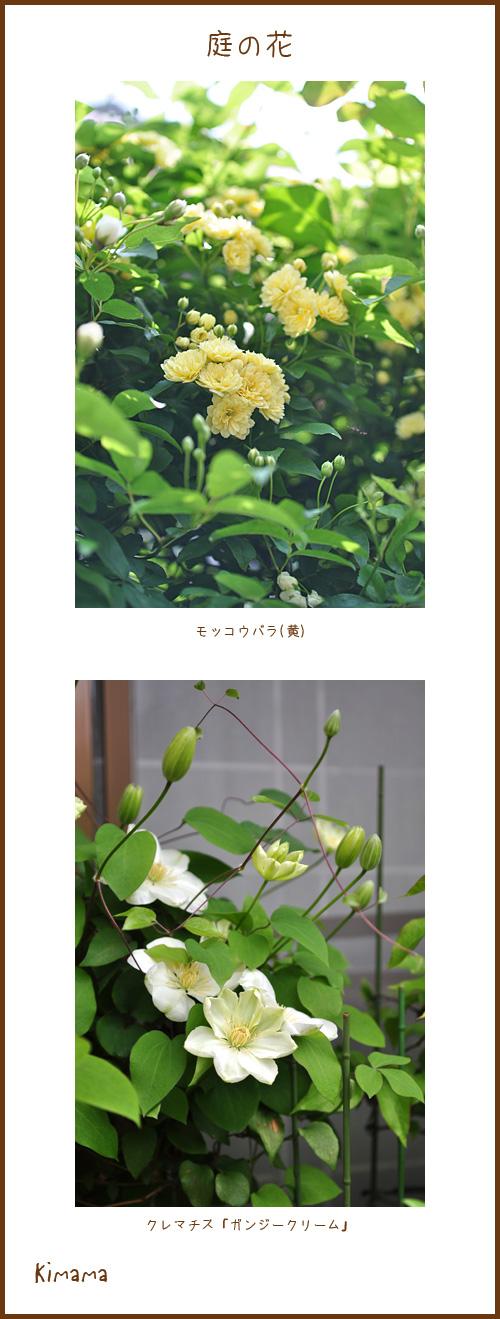4月25日庭の花1