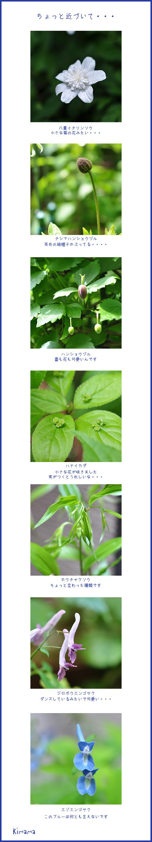 4月25日庭の花2