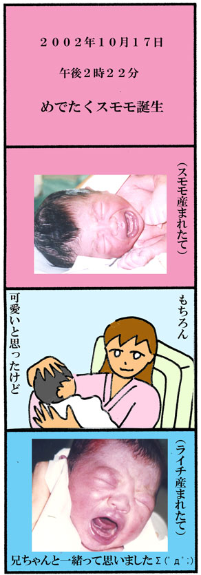 スモモ出産03