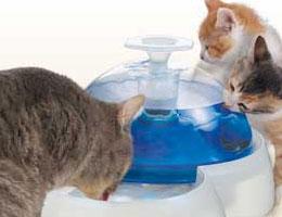 ネコの日3