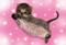 子猫ぽすとかーど-のコピー のコピーサムネイル60×41