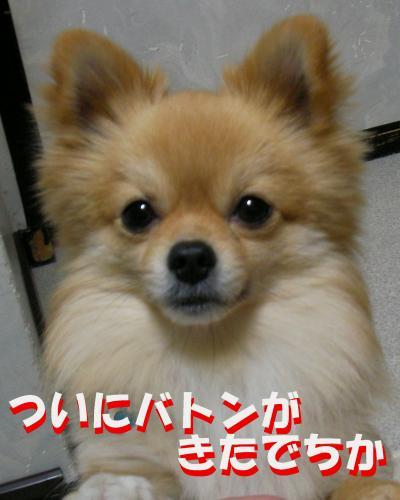 SA080307a2_convert_20080314160727.jpg