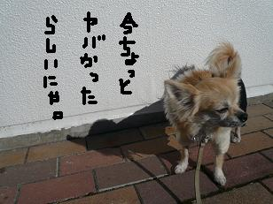 P1050591-deji.jpg