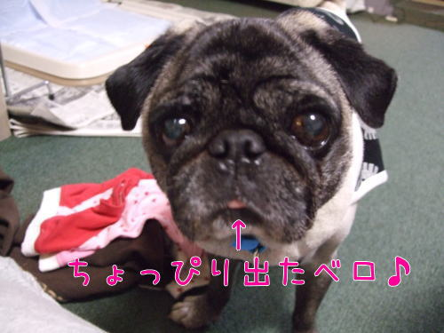 2009_05180078.jpg