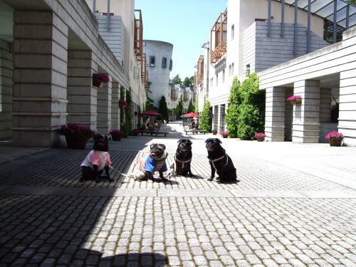 2009_05180109.jpg