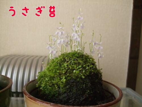 2009_05260002.jpg
