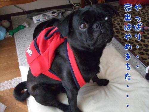 2009_05260019.jpg