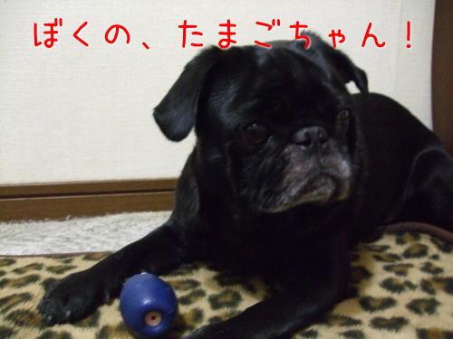 2009_06040078.jpg