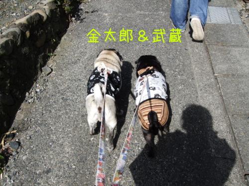 ichigo03.jpg