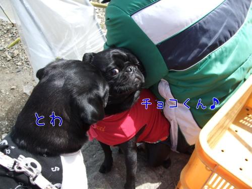 ichigo12.jpg