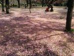 新宿御苑の花絨毯