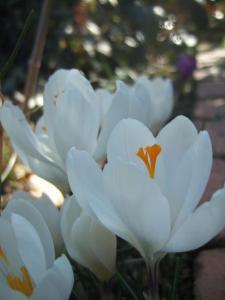 2008-03-15_20.jpg