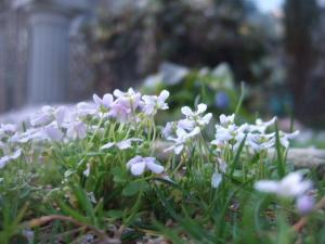 2008-03-15_34.jpg