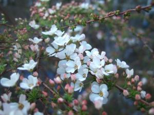 2008-03-15_36.jpg