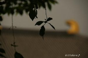 中学の修学旅行は奈良・京都・大阪でした