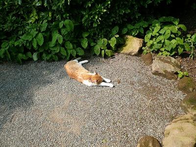 浄明寺の猫