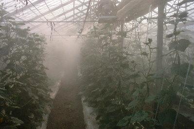 霧散布夕方
