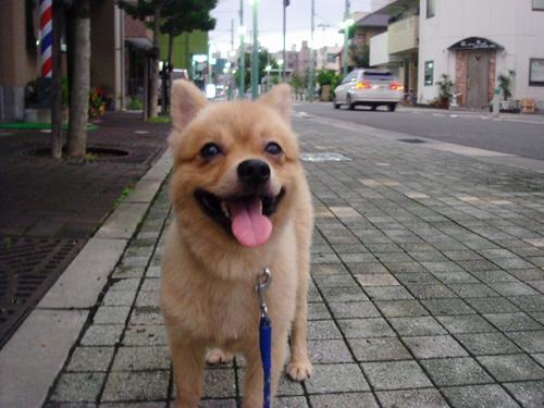 夕方のマール散歩と新長田、晩御飯