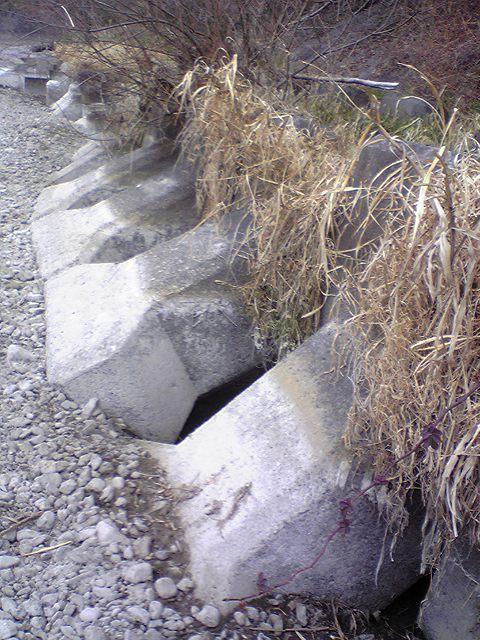 20090119050.jpg