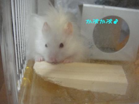 かぷかぷ♪