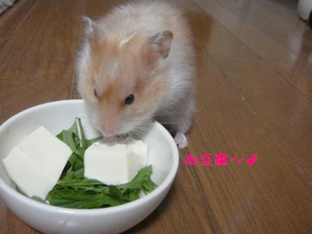 お豆腐~♪