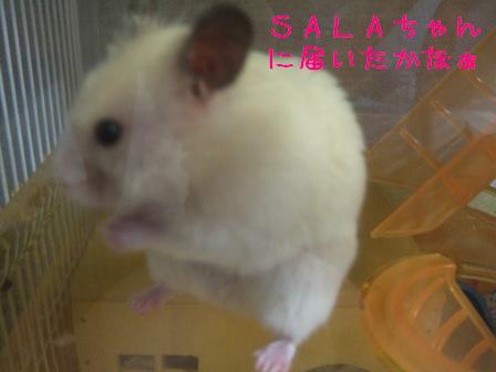 SALAちゃ~ん♪