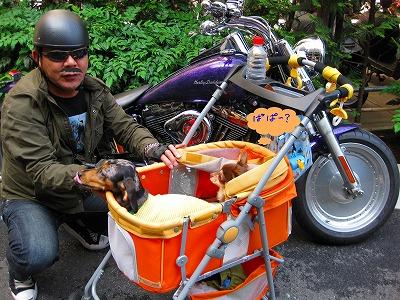 h-2008 06 01 019バイク3