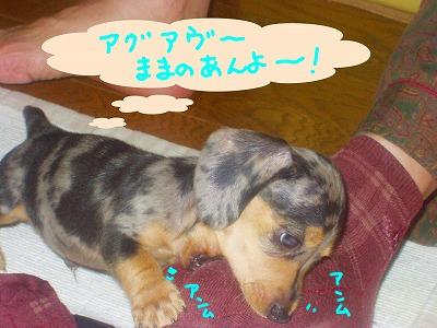 h-P1010095こじ赤ちゃん7