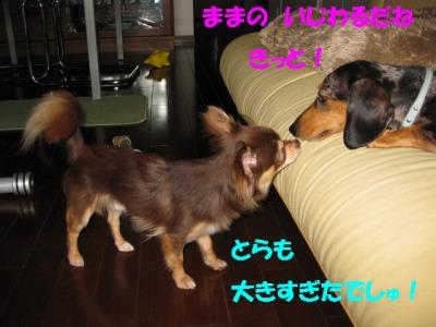 h-IMG_0396_20080622204255.jpg