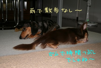 h-IMG_0415.jpg