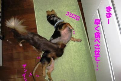 h-IMG_0455-2.jpg
