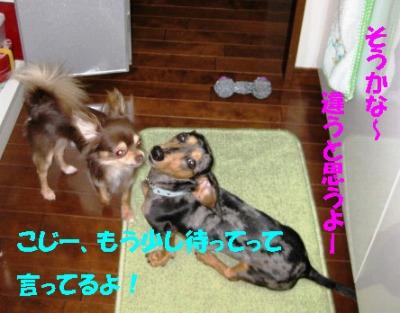 h-IMG_0458-2.jpg