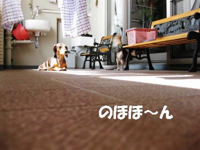 h-IMG_0667.jpg