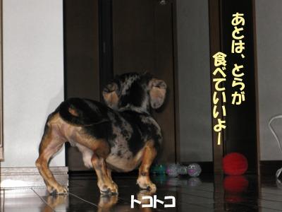 h-IMG_0730.jpg