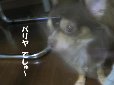 h-IMG_0788.jpg