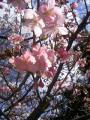 春ですな…