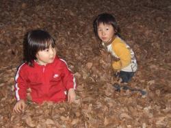 2008年枯葉遊び