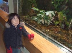 2008年3月6日カエル水槽