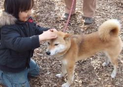 2008年3月9日柴犬