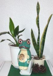 2008年3月10日植物
