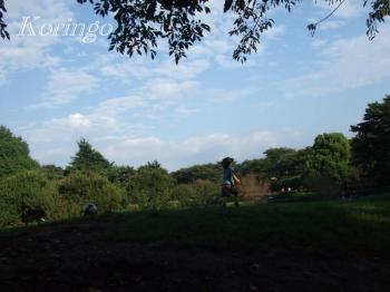 2008年9月23日野川公園